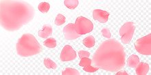 Background With Realistic Pink Rose Petals On White Background. EPS10 Vector.