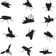 Fly, Various Images, Vector, Black Silhouette