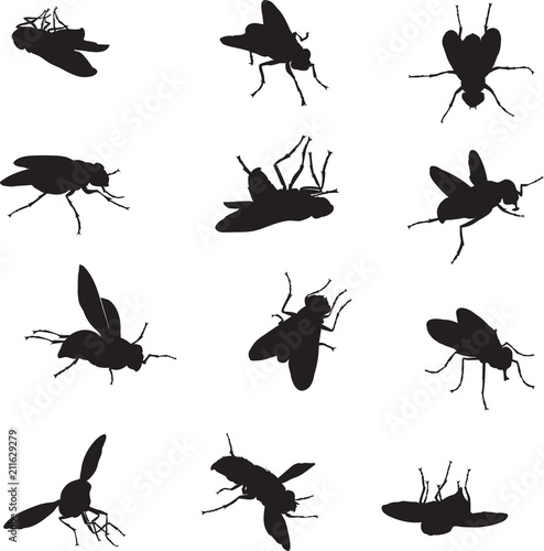 Carta da parati Fly, various images, vector, black silhouette