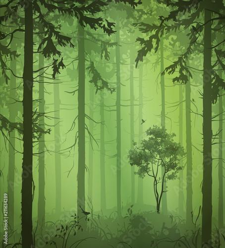 Piękne obrazy  zielone-drzewa