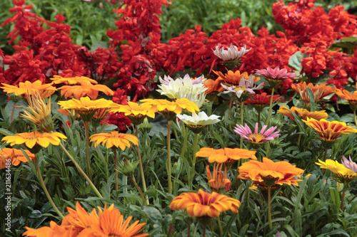 I fiori da giardino piante per giardino fiori esterno