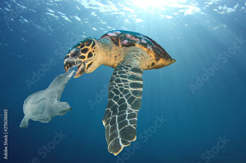 Poster Tortue Plastic pollution problem - turtle eats plastic bag