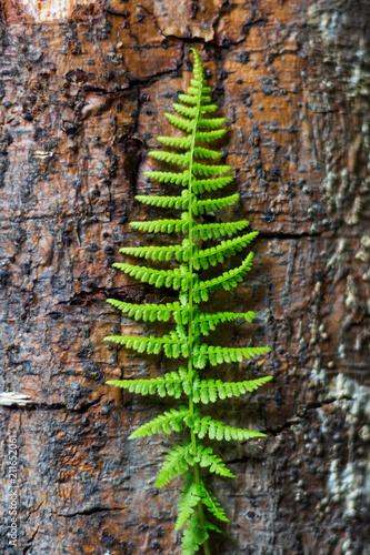 branch of the fern on the trunk of the old tree. selective focus