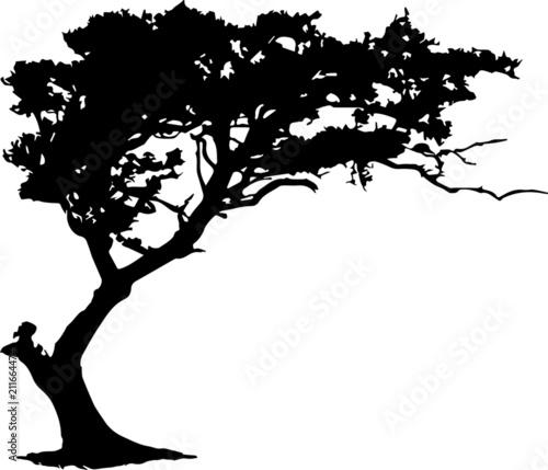 Fotografia  Afrikanischer Baum