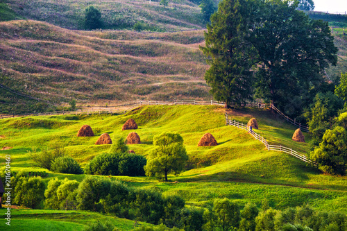Green summer landscape scenic view