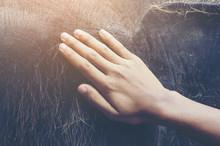 Human Hand Touching A Crying E...