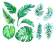 canvas print picture - Set of tropical leaves. Watercolor illustration