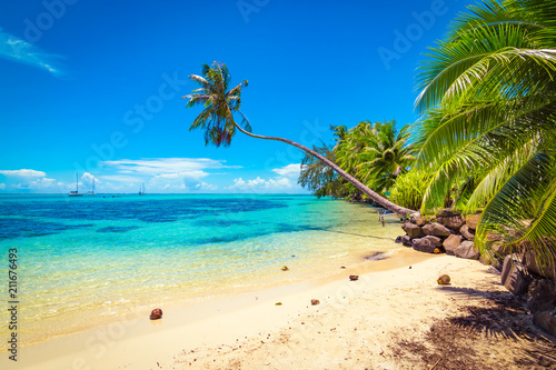 Fotomural Tropical ocean beach, coconut palm trees and transparent turquoise water