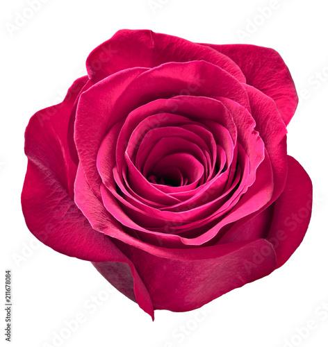 Staande foto Roze flower rose petal blossom red nature beautiful background