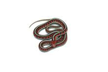 Eastern Garter Snake Isolated ...