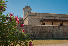 Red Flowers On The Background Of The Old Fortress Fortaleza De Jagua. Castillo De Jaguar. Cuba, Cienfuegos.