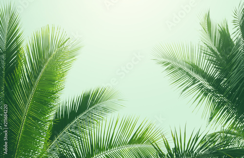 Poster Palmier coconut palm tree in vintage style
