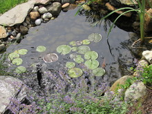 A Man Made Koi Fish Pond With ...