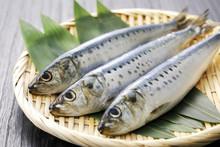 真鰯 Japanese Sardine