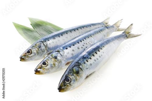 Poster Vis 真鰯 Japanese sardine