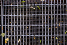 Storm Drain Filter With A Few Leaves