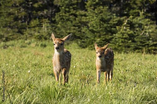Fotobehang Ree Twin Fawns frolicking