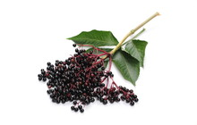 Elderberries With Twig And Lea...