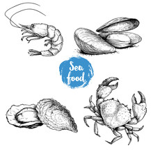 Seafood Sketches Set. Fresh Sh...