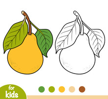 Coloring Book, Pear Tree Branch