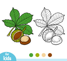Coloring Book, Horse Chestnut Branch