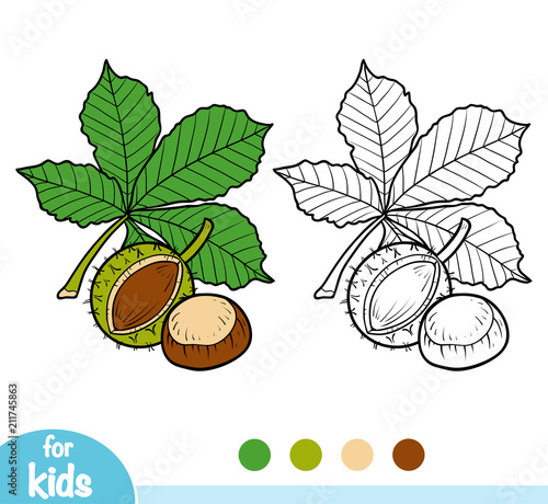 Photo Coloring book, Horse Chestnut branch