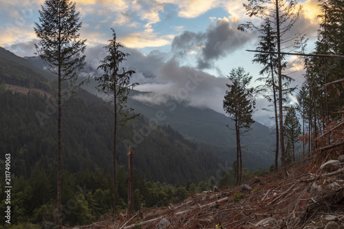 Papiers peints Marron chocolat Beautiful BC Mountain and Forest Landscape in Logging Cut