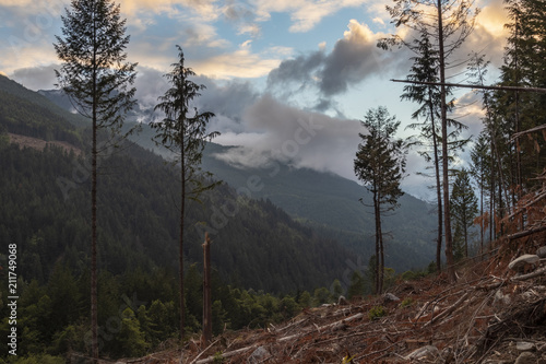 Foto op Aluminium Chocoladebruin Beautiful BC Mountain and Forest Landscape in Logging Cut