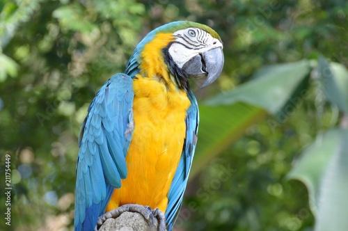 Foto op Plexiglas Papegaai Parrot Bird