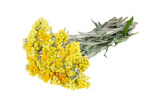 Immortelle Flowers Isolated On...