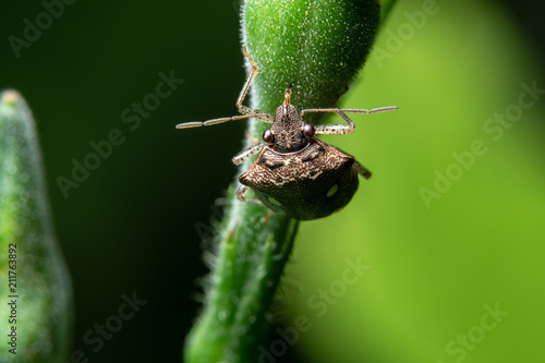 Photo  Macro assassin bug