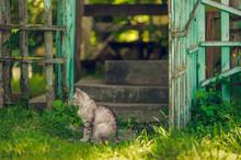 Quiet Cat Sitting Near Open Ru...
