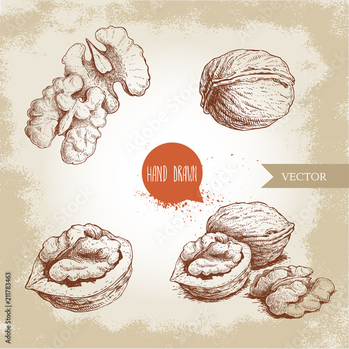 Obraz Hand drawn sketch style walnuts set. Whole, half and walnut seed. Eco healthy food vector illustration. Isolated on old looking background. Retro style. - fototapety do salonu