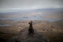 Weimaraner Dog Sitting On Cliff
