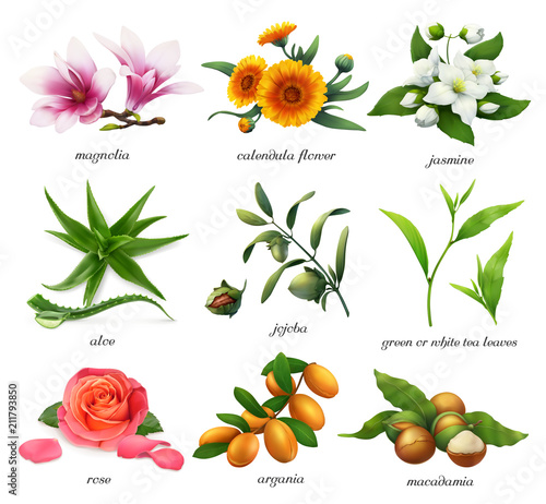Valokuva  Medicinal plants and flavors