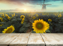 Sunflower Seeds In Sack. Sunflower Seeds In Burlap Bag On Wooden Table With Field Of Sunflower On The Background. Sunflower Field With Blue Sky. Photo With Copy Space Area For A Text