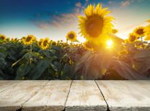 Sunflower Seeds In Sack. Sunfl...
