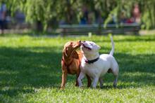 Due Cagnolini Liberi Nel Parco Che Si Scambiano Bacini