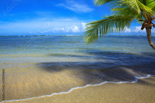 Tuinposter Centraal-Amerika Landen Palm tree on white tropical beach. Travel background.