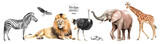 watercolor illustration of African animals: zebra, lion, ostrich, elephant, giraffe, eagle, southern savannah tree and stones, a set of drawings from the hands of animals in the zoo