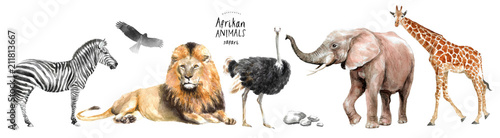 Photo  watercolor illustration of African animals: zebra, lion, ostrich, elephant, gira