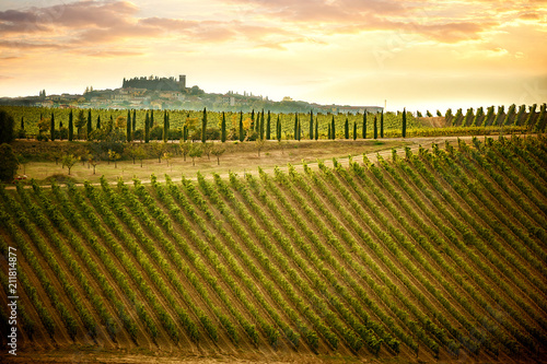 Fotografiet  Chianti hills with vineyards and cypress