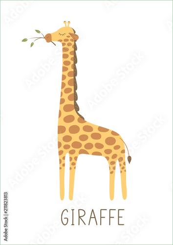 Fototapeta premium Śliczna żyrafa z gałęzi drzewa na białym tle. Ilustracji wektorowych.