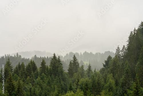 Autocollant pour porte Kaki Wolkenverhangener Waldabschnitt