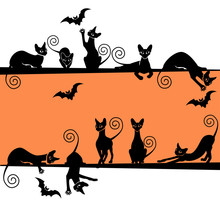 Halloween Background With A Bl...