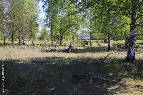 Fotografia  Laubbäume, Birken mit umgestürtzten Bäumen und Wurzeln, auf einer Steppe im Natu