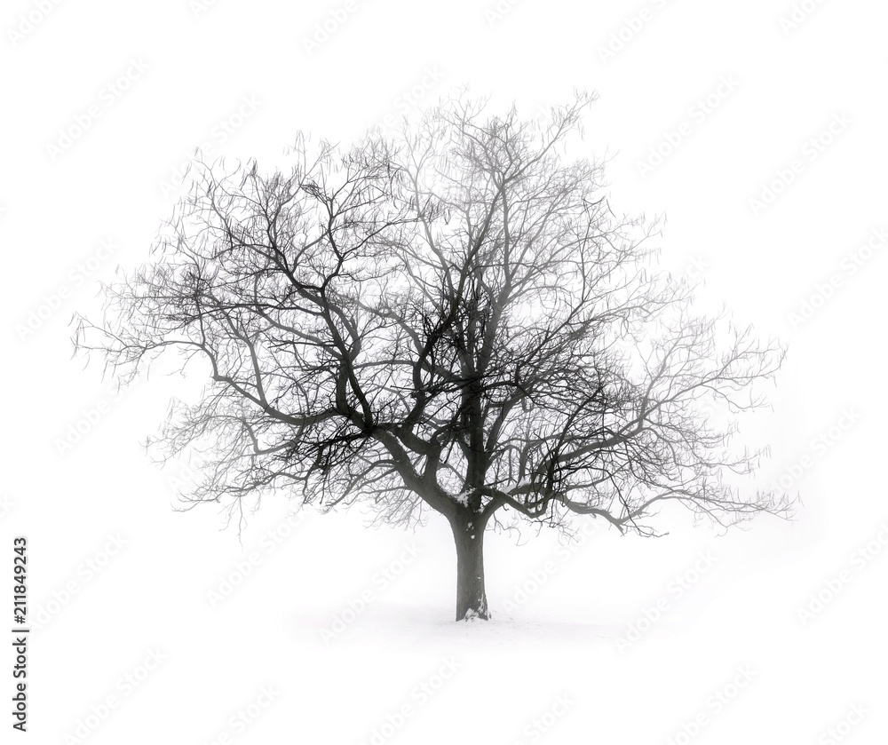Winter tree in fog