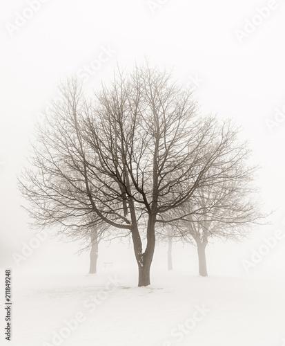 zimowe-drzewa-we-mgle