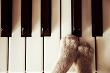 Cats Paws Lying On The Piano K...