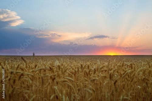 Spoed Foto op Canvas Platteland Summer sunrise, wheat field